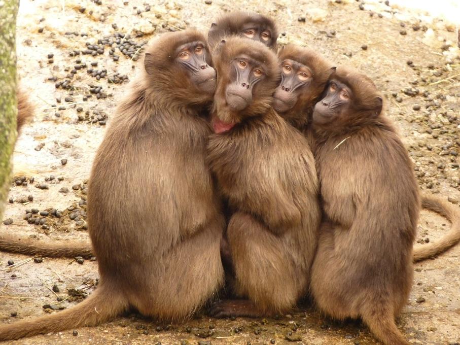 יש דרכים יותר יעילות להתחמם מאשר להתחבק אחד עם השני