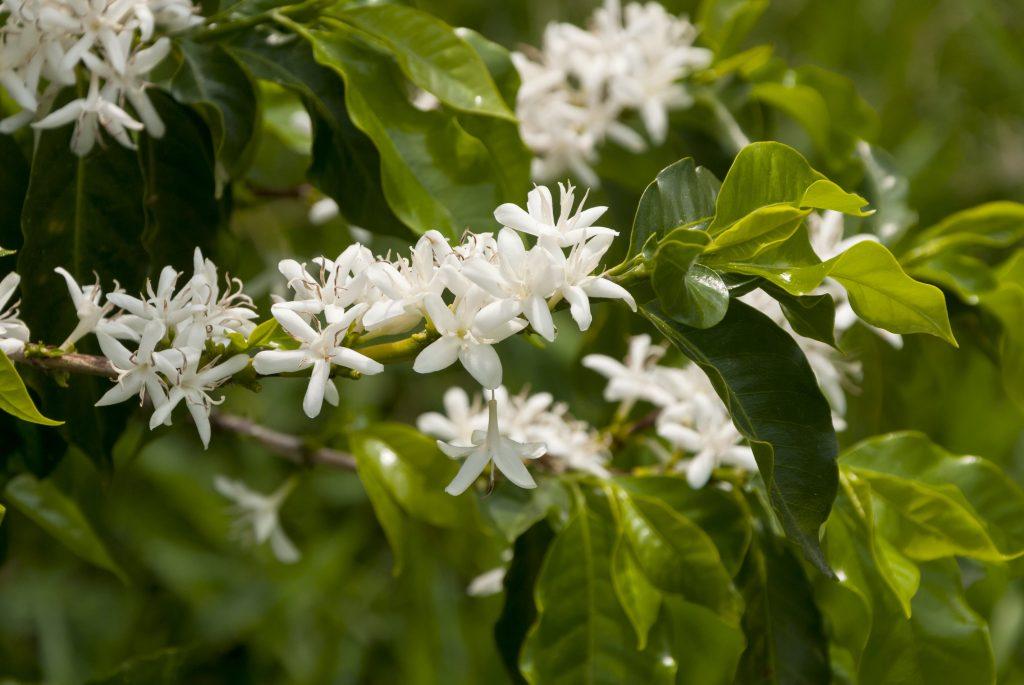צמח ההדס. לא רק שהוא טוב בספיחת לחות אלא גם טוב להרחקה או חיסול של חיידקים שנישאים באוויר